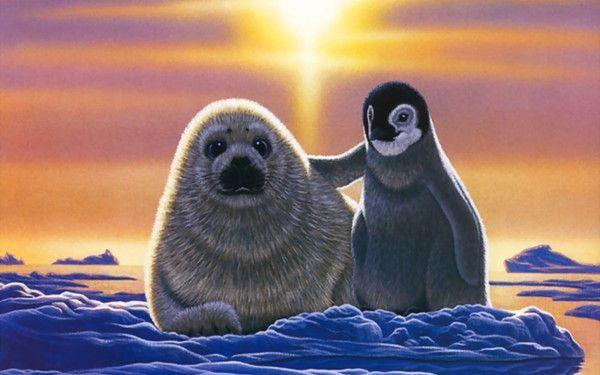 Image, bébé phoque, pingouin
