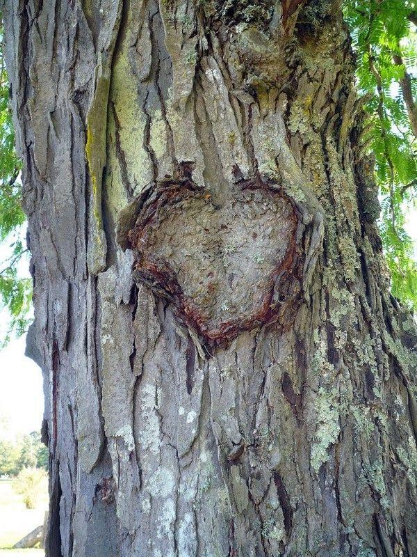 photo d 39 un coeur sculpt dans un arbre centerblog. Black Bedroom Furniture Sets. Home Design Ideas