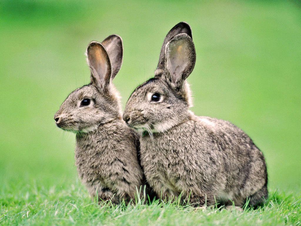 Lapins et lievres - Cuisiner le lapin de garenne ...