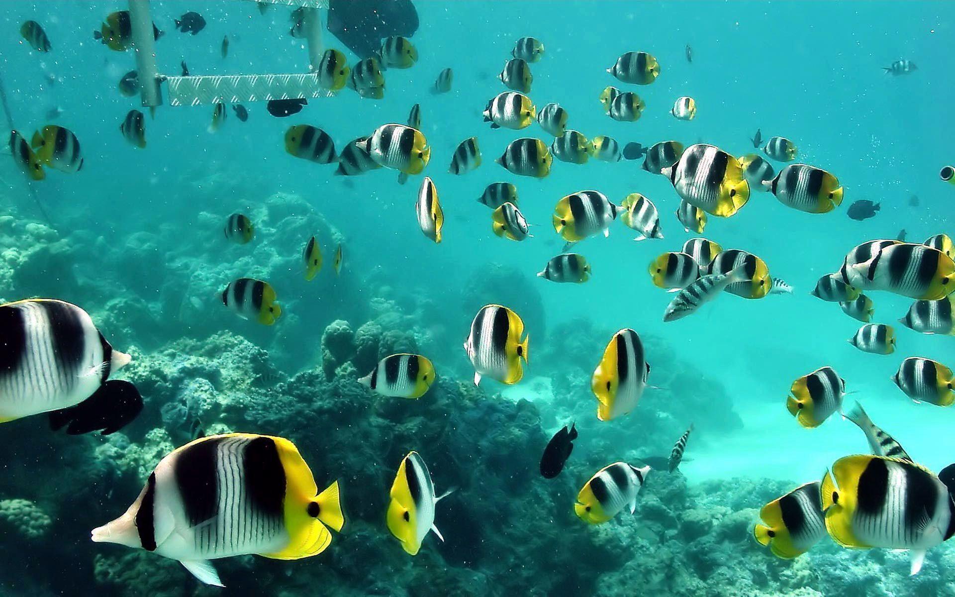 ecdc87dc28 Fond d'écran, poissons tropicaux